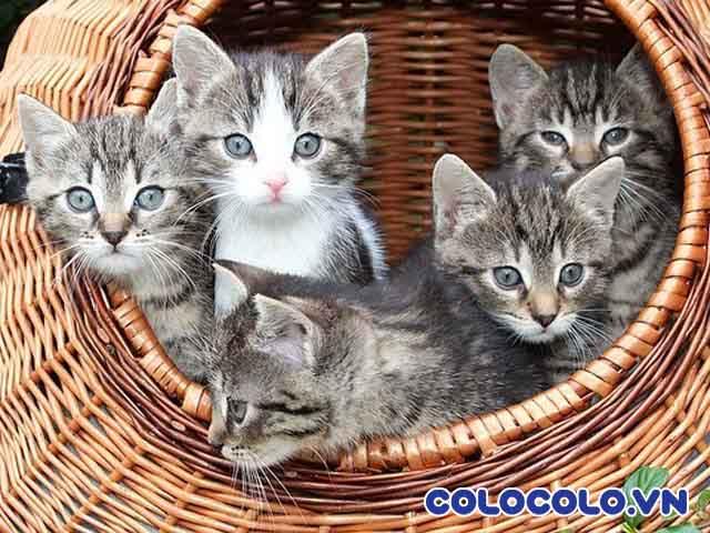 Cách làm sạch lông mèo