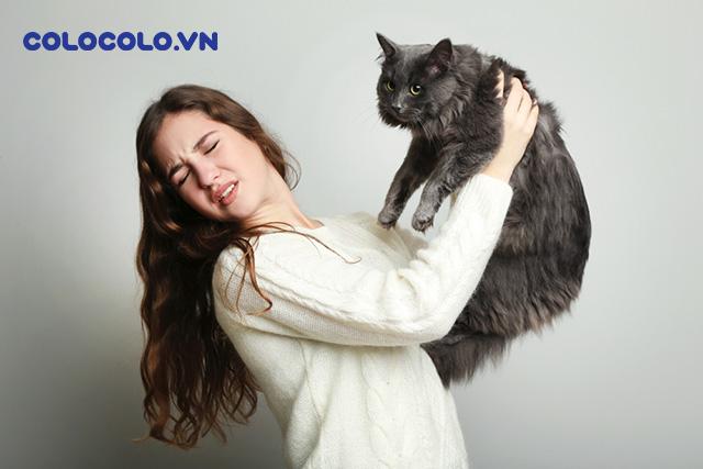 dị ứng lông mèo