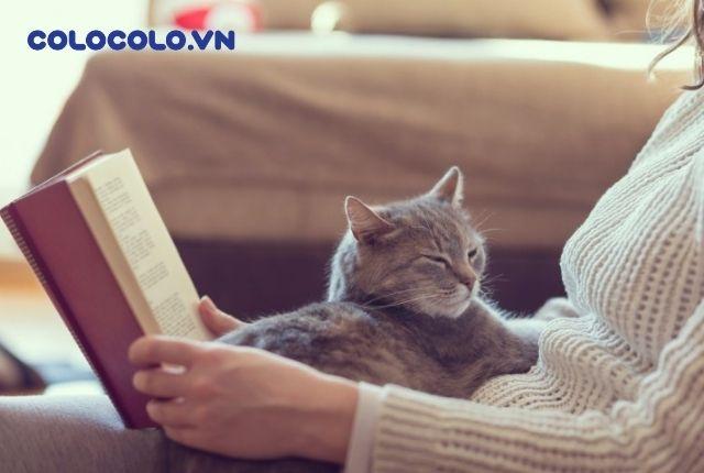 tại sao mèo thích ngủ với người