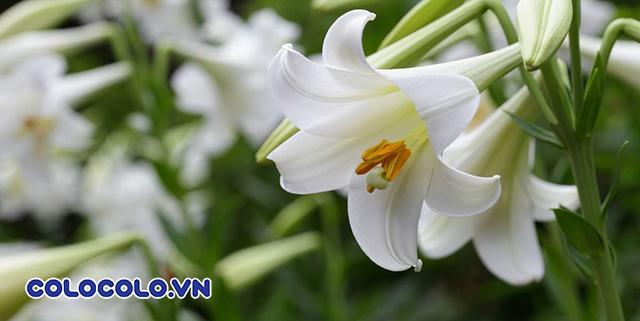 cắm hoa bàn thờ