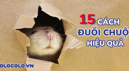 đuổi chuột