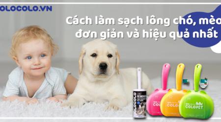 Cách làm sạch lông chó hiệu quả