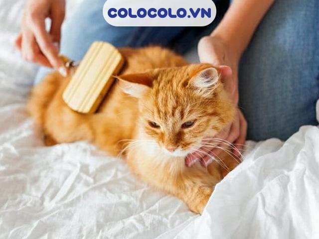 Chải lông thú cưng thường xuyên - Cách làm sạch lông chó mèo trong nhà